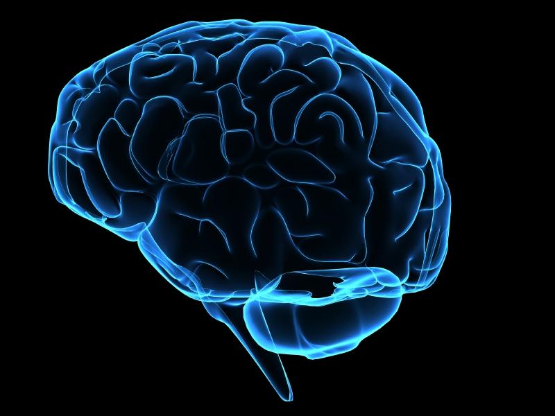Ученые узнали, как мозг сохраняет внутренний баланс