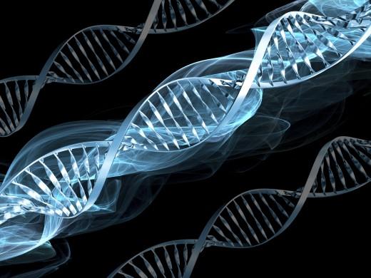 От хромосомы к ДНК