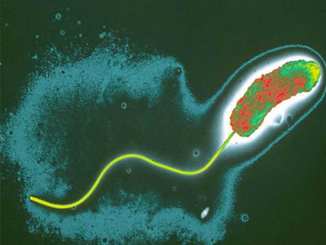 Эффективность антибиотиков при лечении холеры