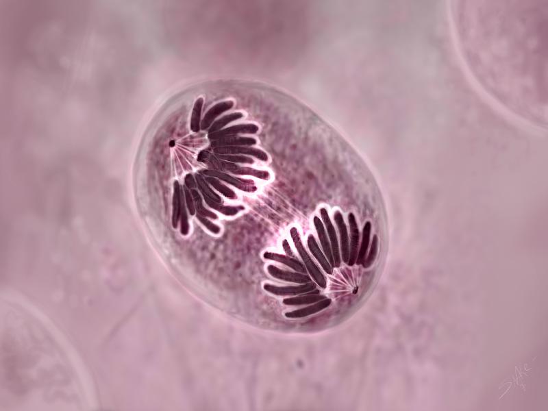 Клеточное деление